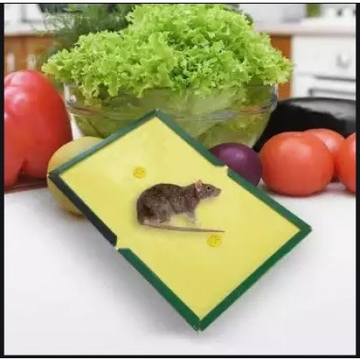 Catch Mouse Glue Traps Mouse Insect Lizard Spider Cockroach Catcher Sticker